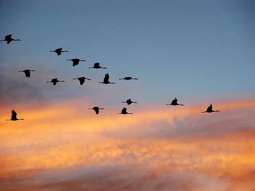 jato-ptica photobucket com