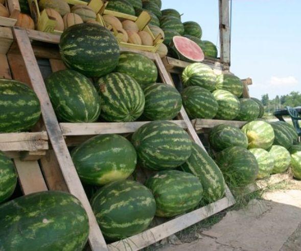 lubenica-prodaja-banjaluka.jpg
