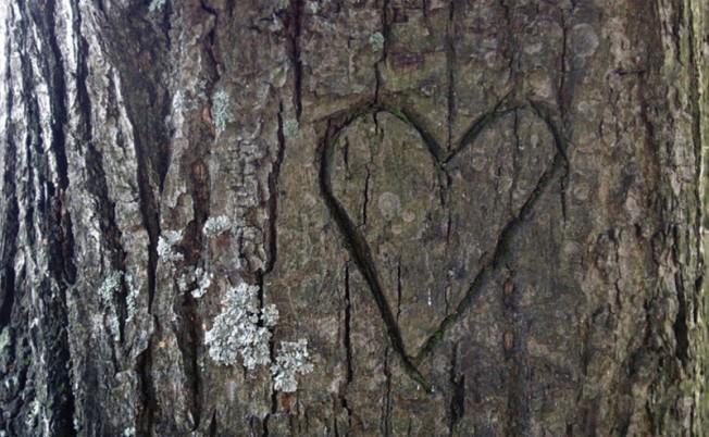 drvo-srce