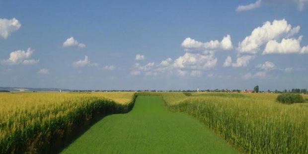 vojvodina-ravnica-poljoprivreda-zemlja_660x330.jpg
