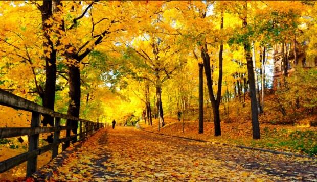 jesen-sastav.jpg