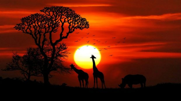Sunset-African-Savanna-Sun-red-sky-silhouettes-of-tree-animals-Desktop-Wallpaper-HD-3840x2400-915x515