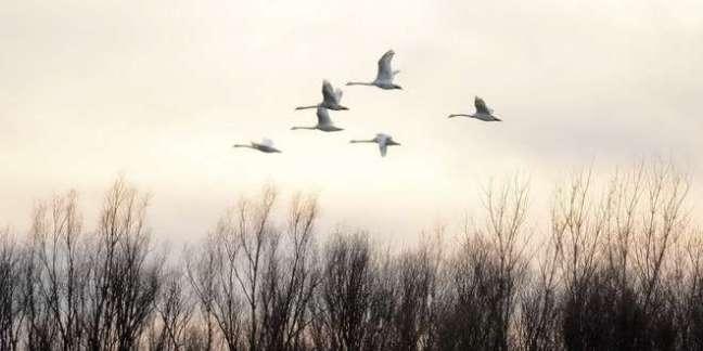 ptice-zima-oblaci-oblacno-prolece-sunce-suncano-vreme-2_660x330.jpg