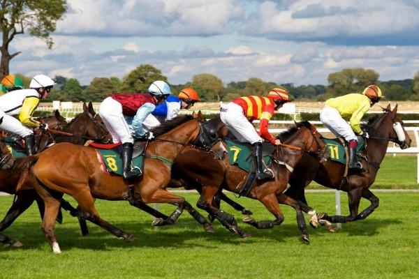 najskuplji-konji-na-svetu