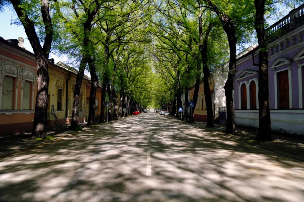 ulica-petra-drapsina-kikinda-mondo-goran-sivacki-4-